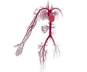 angiologia